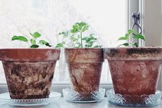 Vårljus och växtkraft!