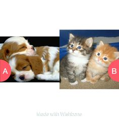 Puppies or kittens? Click here to vote @ http://getwishboneapp.com/share/9159942