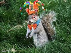 Grey Squirrel Girl Costume Ears Headband Tail Set Luxury Faux - Student befriends campus squirrels then dresses them in the cutest outfits ever