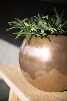 Vase, Plants, Home Decor, Garten, Homemade Home Decor, Flower Vases, Flora, Plant, Jars