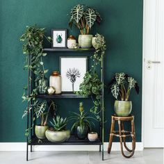 Dark green scindapsus spikkel and alocasia polly – Home Decor Apartment Dark Green Living Room, Dark Green Walls, Bedroom Green, Green Rooms, New Bedroom Design, House Plants Decor, Bedroom Plants, Piece A Vivre, My New Room