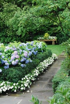 7 Wondrous Unique Ideas: Cottage Garden Ideas The Secret garden ideas decoration projects.Country Garden Ideas Farms sub tropical garden ideas. Hydrangea Landscaping, Hydrangea Garden, Landscaping Ideas, Flowers Garden, Outdoor Landscaping, Nikko Blue Hydrangea, Southern Landscaping, Limelight Hydrangea, Garden Paths
