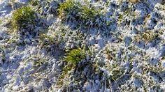 Schneehauch