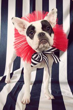 La Tavola Fine Linen Rental: Awning Stripe Black + White Linen (as background)