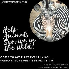 Help Animals Survive in the Wild! Come to My First Event in KC Sun Nov Surviving In The Wild, Home Protection, First Event, Event Photos, Wildlife Photography, Photo S, Charity, Benefit, Survival