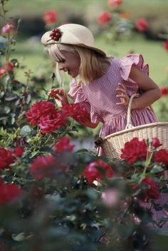 How and When to Prune a Mr. Lincoln Rose Bush