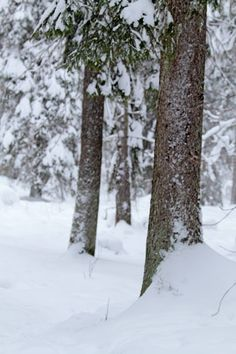 Winter in the forest, Sweden