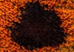 butterfly-wings-macro-5.jpg (JPEG Image, 880×628 pixels)