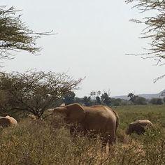 Kenya from Instagram