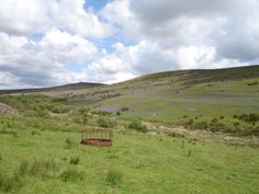 Dartmoor - Medieval field system exposed by bluebells in bloom, Challacombe Down.  Birch Tor in the distance.