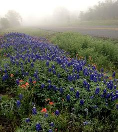 Oh, Texas my Texas...So beautiful. Waaaaaah!  ::starts bawling because she's stuck in the less beautiful midwest::