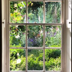 Summer window looking out to @mccormickcharlie beautiful blowsy borders