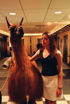 "Aubrey Plaza  I can just hear her saying ""This is my Llama...Dolly"" lol"