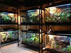 Reptile Zoo, Reptile Habitat, Reptile House, Reptile Cage, Terrariums, Terrarium Reptile, Aquarium Terrarium, Les Reptiles, Cute Reptiles