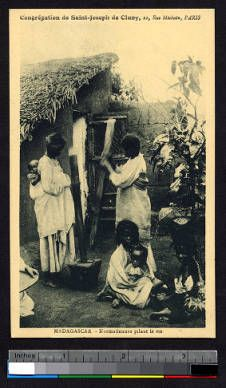 Women grinding rice, Madagascar, ca.1900-1930 :: International Mission Photography Archive, ca.1860-ca.1960