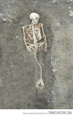 Real life mermaid