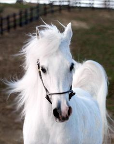 Lovely horse. Beautiful bright white soft coat.