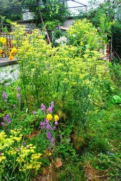 How to Grow Your Own Mulch | Permaculture Magazine