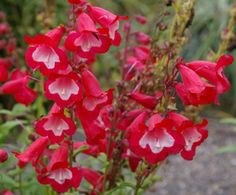 Summer Blooming Perennials for the Pacific Northwest