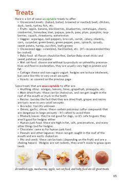 Treat List (Safe Fruits and Veggies) - Hedgehog Central – Hedgehog pet care & owner forum