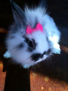 Lion head bunnies >>