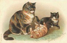 Cat & kittens.