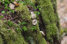 wald°sinnen: April°Wald Fruit, Nature, Woodland Forest, Naturaleza, Nature Illustration, Off Grid, Natural