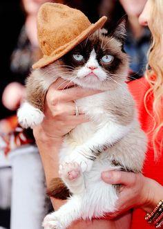Grumpy Cat attends the 2014 MTV Movie Awards