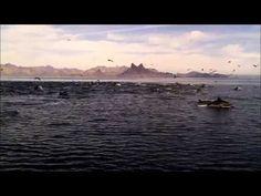 Recuerdos de mi hermoso Mar de  Cortez San Carlos Sonora Mexico...