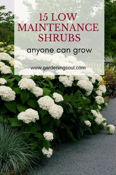 Low maintenance landscaping front yard - 15 Low Maintenance Shrubs Anyone Can Grow – Low maintenance landscaping front yard Outdoor Landscaping, Outdoor Plants, Front Yard Landscaping, Landscaping Ideas, Shade Landscaping, Southern Landscaping, Hydrangea Landscaping, House Landscape, Landscape Designs