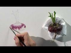 Watercolour Fruit & Vegetable Portraits Four - Part Two - YouTube