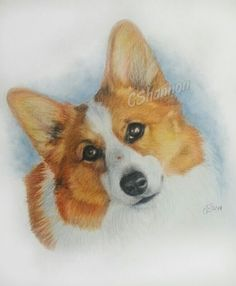 Corgi hand drawn pet portrait.  I can't imagine a life without the special joy that dogs bring. www.cshannon.ca #corgi #petportraits #dogs #animals