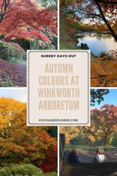 Autumn Colours at Winkworth Arboretum, National Trust in Surrey Days Out In London, Hiking With Kids, Family Days Out, Autumn Colours, National Trust, Surrey, Family Travel, United Kingdom, Travel Tips