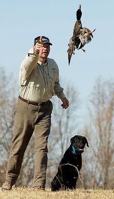 Teaching a Young Dog to Hunt By J. Paul Jackson Retriever Editor