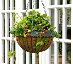 Fill a hanging basket with strawberry plants, enjoy pretty white flowers in early Summer followed by juicy fruits.  A hanging basket is an  ideal way of growing strawberries, as it keeps the fruit off the ground and so is much less likely to suffer from pests and diseases.