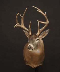 Whitetail Deer Hunting, Big Deer, Deer Mounts, White Tail, Taxidermy, Drawing Ideas, Animals, Ideas For Drawing, Animales