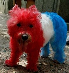This American celebrates his freedom to dye his hair however he chooses! | 23 Freedom-Lovin' Dogs