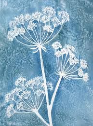 Image result for cow parsley image