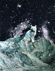 Cat on the moon. This is so completely bizarre I want a print of it on my wall.