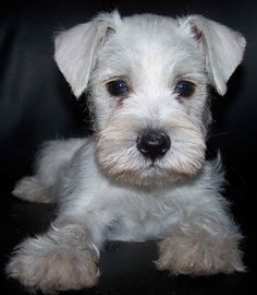 In the future we want a cute little angel that looks like this to keep Gordo company.. :)