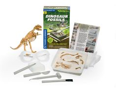 Fossilise, dig up and reconstruct a dinosaur skeleton replica. Learn fossils form, how palaeontologists excavate them and how dinosaur bones are pieced together to form complete skeletons. Model the process of fossilisation by burying your dinosaur bones in layers of plaster 'rock'. Part of the ignition range, suitable for ages 8+