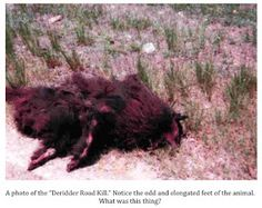 Found in Louisiana by a woman...could it be the shape-shifting Rougarou..