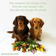 Daily Dogspiration #dog #puppy #dachshund #quote