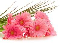 bouquet of flowers 23151