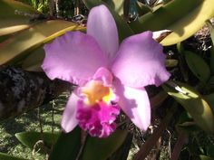 Just love orchids, don't you?