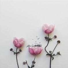 Seite 2 – the child in me is still alive. Flower Words, Flower Art, Art Floral, Desenho Tattoo, Creative Artwork, Little Flowers, Art Background, Flower Pictures, Flower Wallpaper