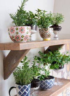 The French Bedroom Company | Urband Jungle Bedroom. We\'re loving the interiors trend of house plants - from concrete planters, cacti, basket pots, hanging plants, palms and so much green for your home. Upcycled mugs and colourful pottery as plant pots for herbs in a kitchen and on a wooden shelf