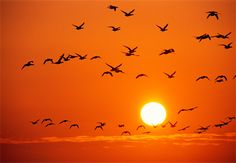 Birds fill an orange sky over Germany's Wattenmeer National Park Orange Bird, Orange Sky, Orange Color, Orange Zest, Color Of The Week, Color Of Life, Orange You Glad, Orange Is The New, Merry Christmas