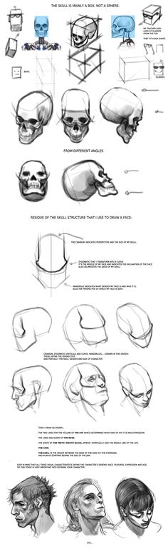 Quick Facial Anatomy Tips by Smirtouille on deviantART via PinCG.com