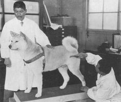 2015-07-31 23_48_01-Nearly 100 Years Later, One Dog's Unwavering Loyalty Is Still Honored And Celebr